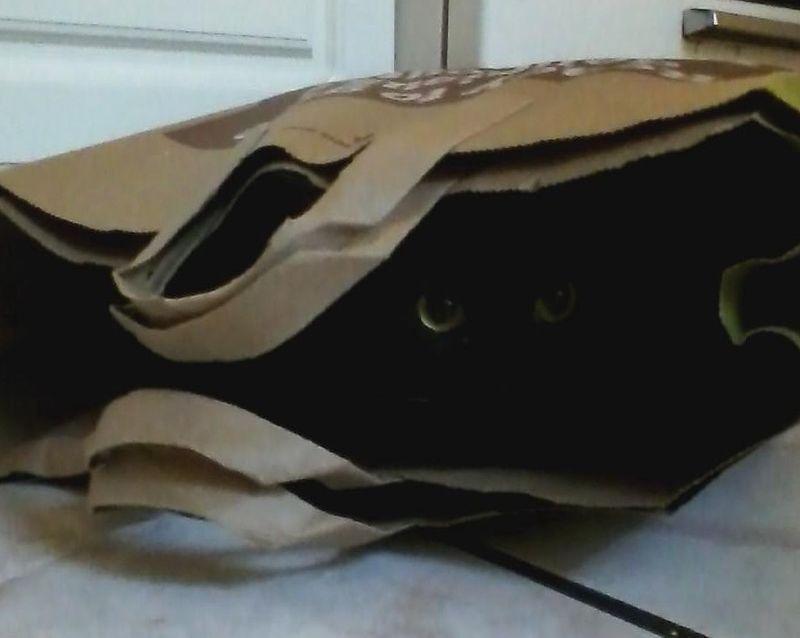 Cat's in the bag crop